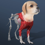 Idle Pet – Create cell by cell Mod Apk 5.3
