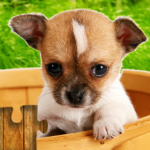 Dogs Jigsaw Puzzles Game – For Kids & Adults 🐶 Mod Apk 27.0