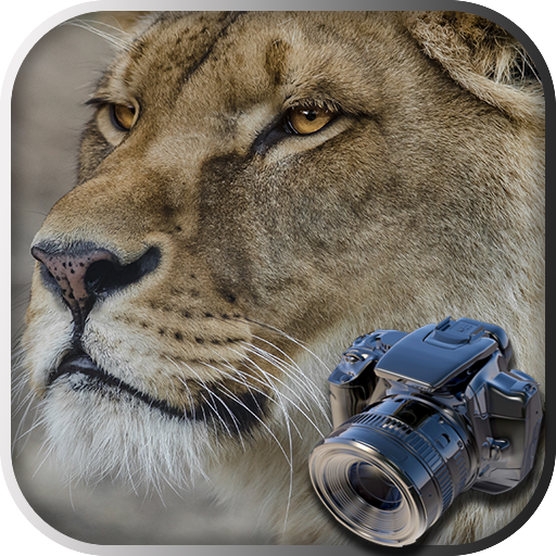 Hidden Animals: Photo Hunt – Seek and Find Games Mod Apk 1.3.002