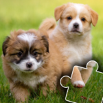 Dogs & Cats Puzzles for kids & toddlers 2 🐱🐩 Mod Apk 2021.44