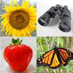 Easy Pictures and Words – Photo-Quiz with 5 Topics Mod Apk 3.1.0